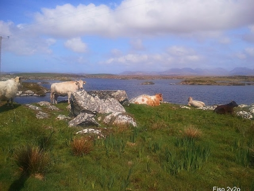 clifden,connemara,irlande,ardmore house b&b