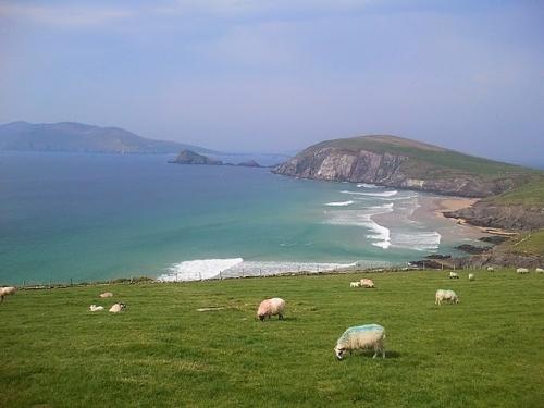 Moutons peinards.jpg